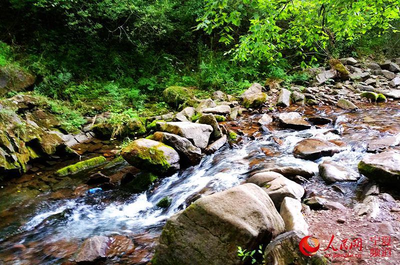 在距离银川市四百公里外的泾源县六盘山国家森林公园,却是另一种风景.